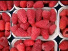 Продам ягоду малины с поля