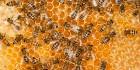 Продам домашній мед