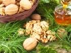 Ёкспорт грецких орехов и пчелиного меда.