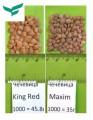 чечевица семена