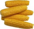 Семена кукурузы.