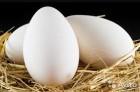 Инкубационное яйцо мясо ячных пород кур. Венгрия