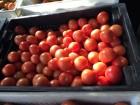 Предлагаем томат тепличный красный. Также зеленый на засол.