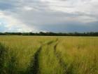 Сено из травы люцерна