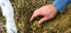 Мицелий трюфеля высылаю по Украине и в другие страны, производитель