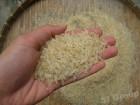 компания импортер продает рис Басмати парбойлд (Пакистан)