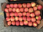 Ёкспорт ѕродажа яблок