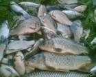 Продпм живую рыбу оптом