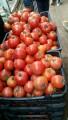 продам помидоры из Алжира