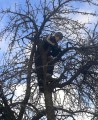 ќбрезка деревьев, восстановление старых садов