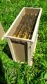 Бджолопакети, пчелопакеты на 2019 год с Доставкой! Запорожье,Днепр