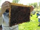 Продам пчелопакеты.