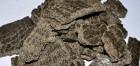 Куплю жмых, шрот, продукты переработки подсолнечника Дорого - Превью изображения 1