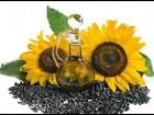 Куплю соняшник дорого