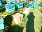 Продам пчелопакеты и пчелоемьи