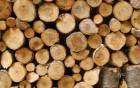 —ушка древесины