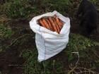 Морковь Морква