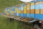 Продам мед без антибиотиков