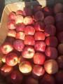 ѕродам яблоки калиброванные оптом со склада 'арьков