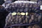 Продам картошку сорт славянка