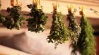 Лекарственные растения (5)