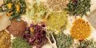 Лекарственные растения (6)