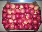 яблоки оптом 7+ от производител¤ от 11.5 грн/кг