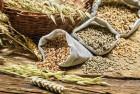 Закупаем гречиху, овес, пшеницу, ячмень