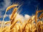 закупаем зерновые, масличные, бобовые