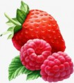 Закупаем ягоду клубнику , малину ежедневно