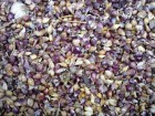 Воздушка (семена чеснока)  «Cофиевский» сорт.