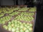 яблоки из ѕольши производитель польска¤ компани¤ Mr Apple