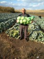 Продам капусту в Харькове с доставкой