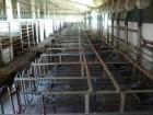 продам станки для осеменения свиноматок б/у