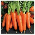 Продам морковь Абако, 400 т, производитель, НДС.