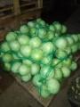 Продаем капусту белокочанную