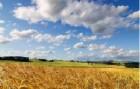 Купуємо пшеницю 2-го класу на договірній основі,