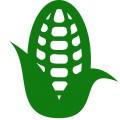 На постоянной основе покупаем кукурузу