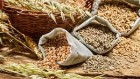 Закупка проса, пшеницы, ячменя, пшеницы яровой