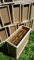 Продам пчелопакеты/ Бджолопакети