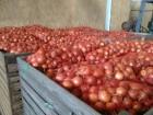 Компания - производитель Greenwill реализует лук репчатый урожая 2016 г