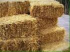 Продам солому пшеничную в тюках
