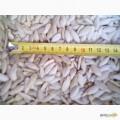 Продам гарбузове насіння Болгарка на посів