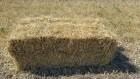 солома в тюках (пшеничная)
