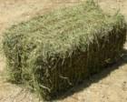Продам сено луговое