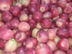 яблуко сорту √олден