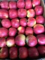 яблуко сорту амео