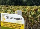 Семена подсолнуха под евролайтинг СИ Эксперто (рекорд урожая в 2017г.