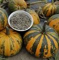 Предварительные контракты на 2017 год на выращивание тыквы