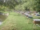 Бджоломатки карпатської породи тип вучківський - Превью изображения 1